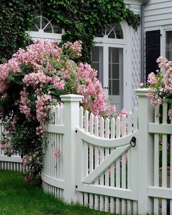 Floral Walkway around a fence and vine