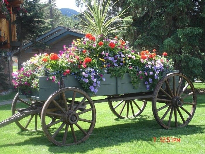 The Wheelbarrow Planter